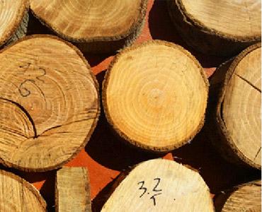 Asesoramiento certificación forestal