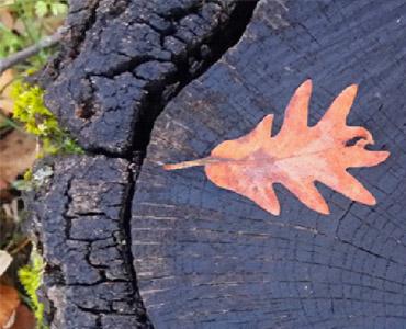 Gestión forestal sostenible