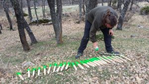 Inventarios forestales e informes selvícolas