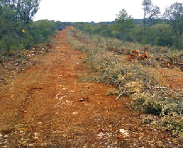 Plan de gestión forestal