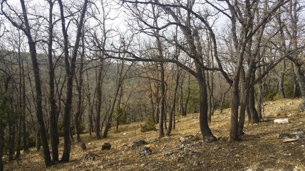 Ordenación y gestión de montes