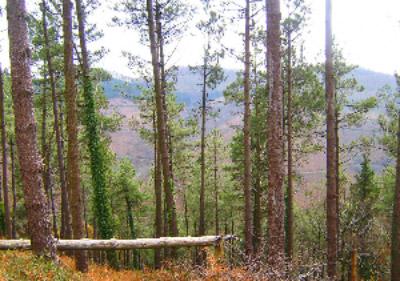 Certificación en gestión forestal sostenible