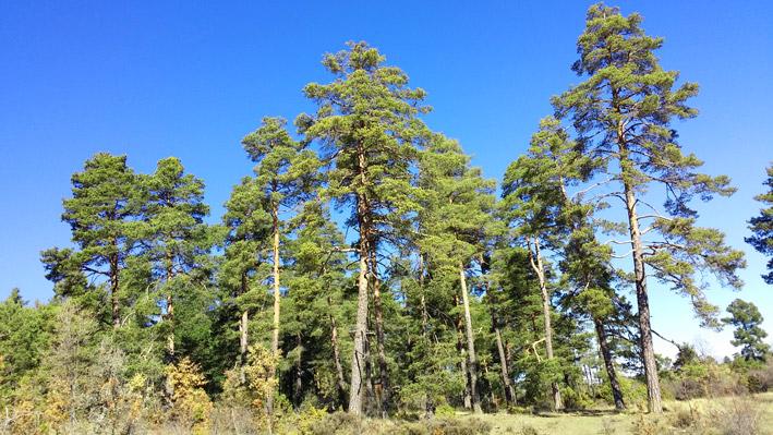Prensa Forestal