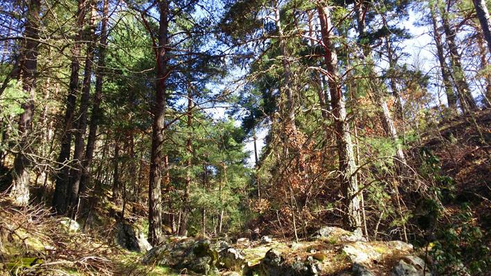 Planes de gestión forestal