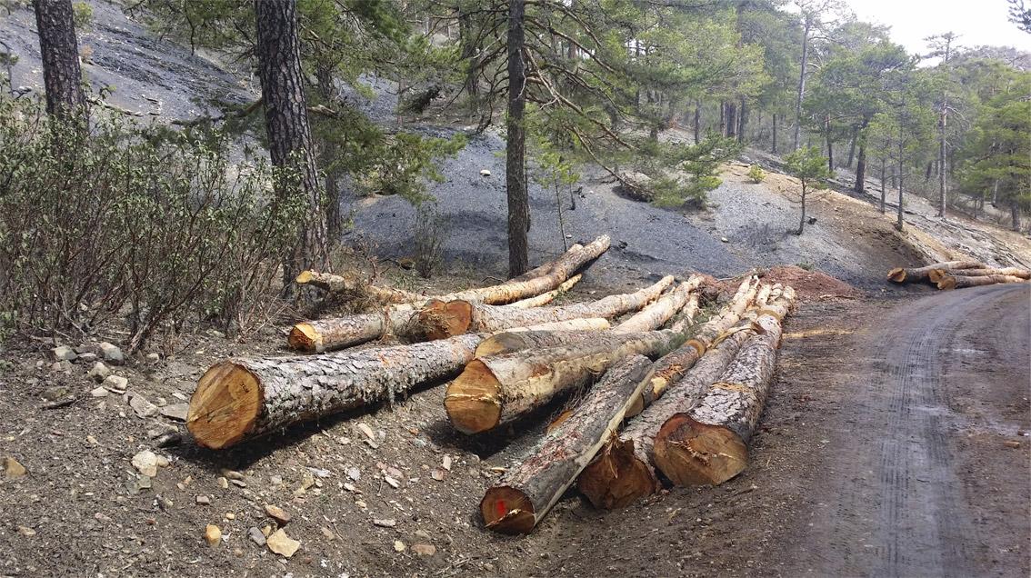 Certificación gestión forestal FSC