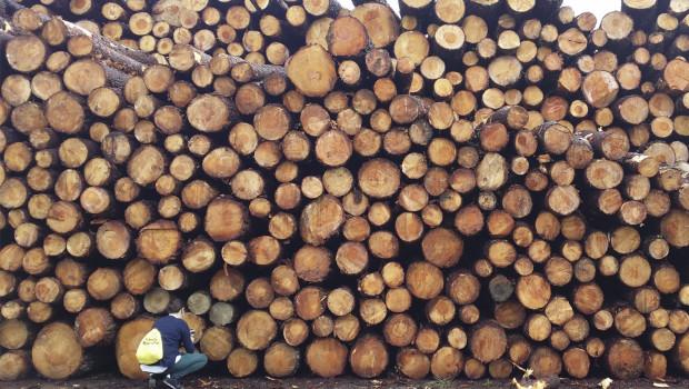 Innovación Forestal